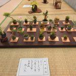 気軽に盆栽を楽しめるように札幌盆栽会が展示会を開く